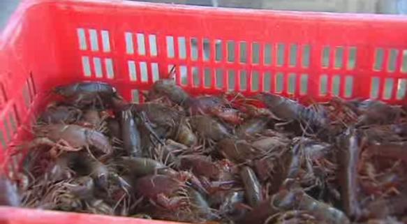 El Bajo Guadalquivir, en defensa del cangrejo