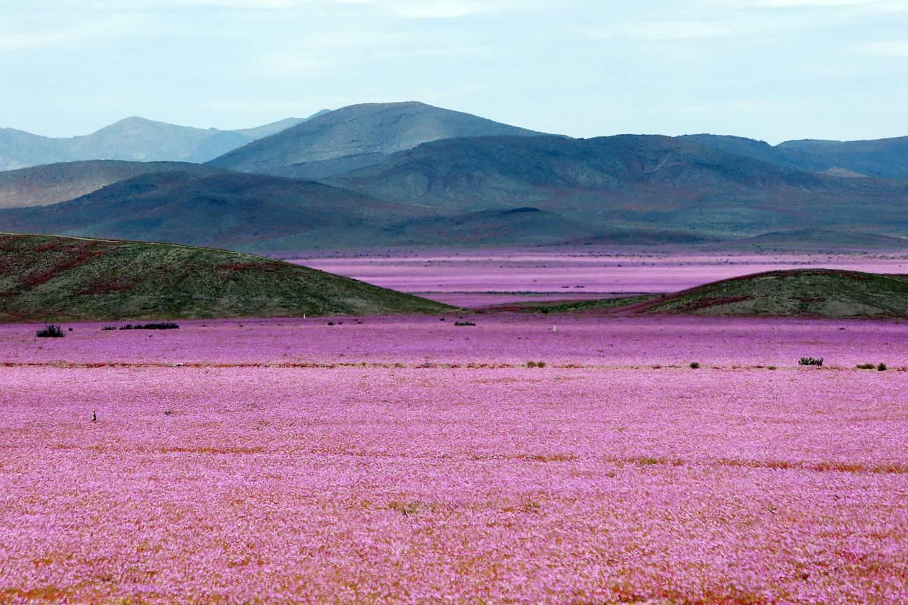 El desierto chileno muestra e