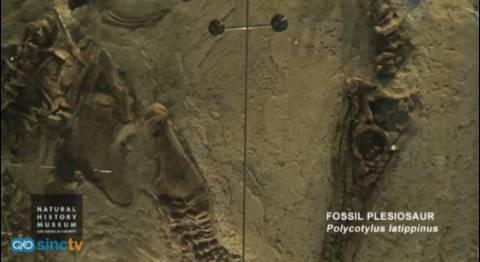 El plesiosaurio daba a luz a sus crías vivas