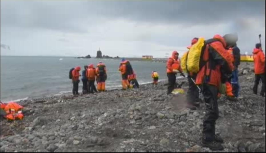 Especies invasoras amenazan el ecosistema de la Antártida