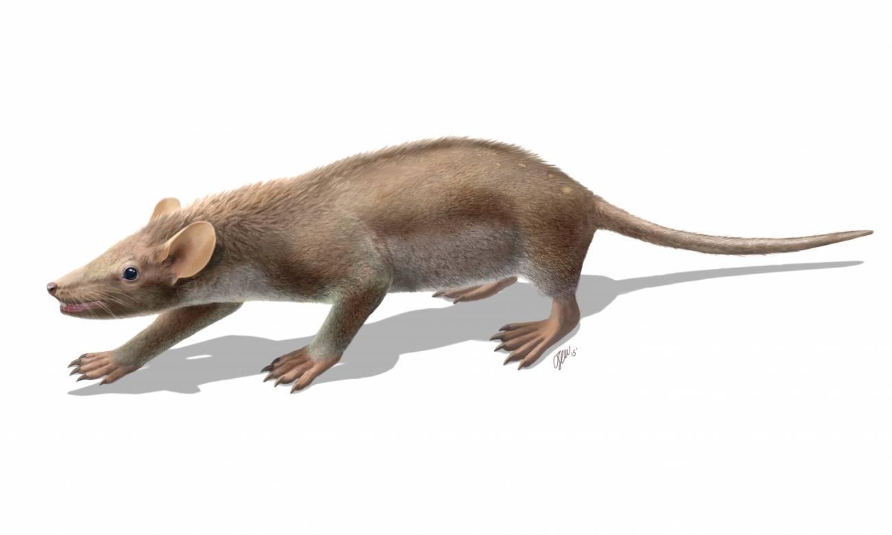 Este fósil hallado en España evidencia