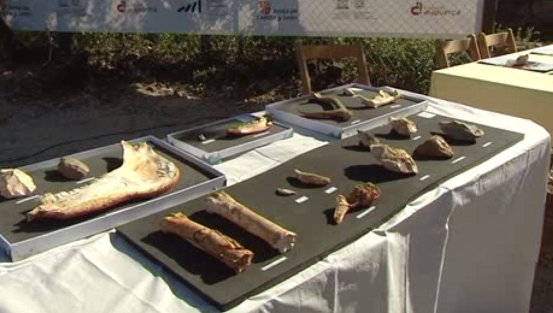 restos en Atapuerca