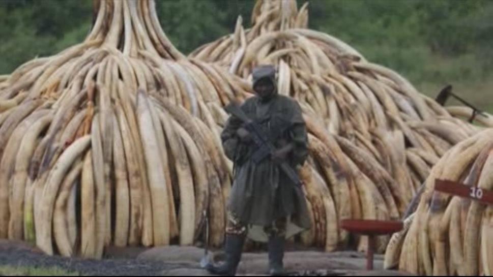 Kenia declara la guerra a los furtivos