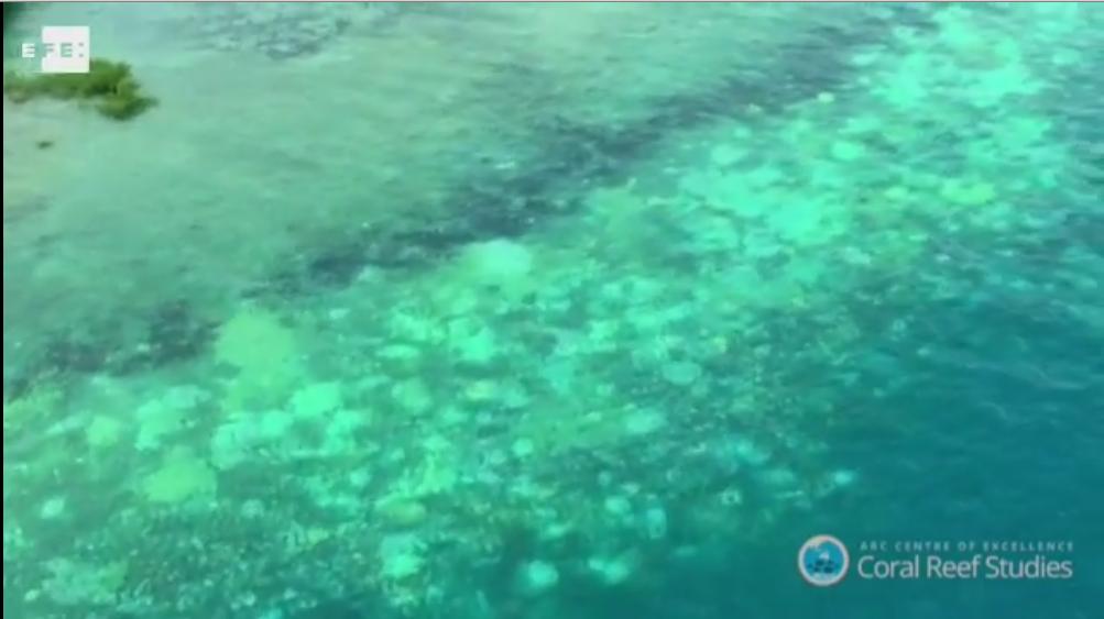 La salud de la Gran Barrera de Coral