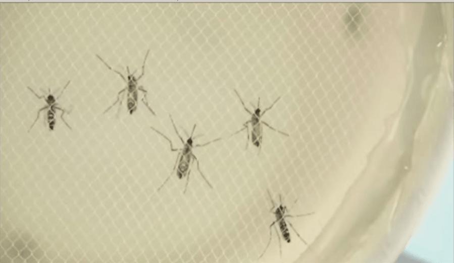Sanidad aprueba el plan contra el zika