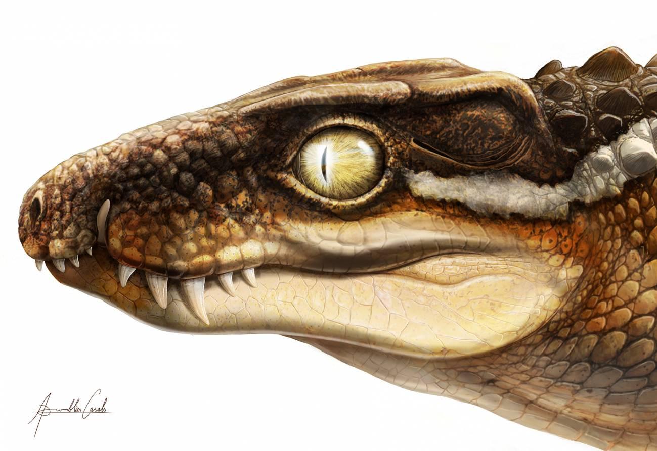 Descubierto-en-los-Pirineos-un-nuevo-cocodrilo-extinto-a-partir-de-un-fosil-robado.jpg