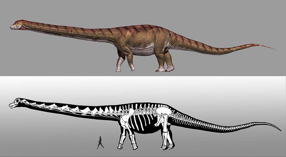 El Dinosaurio Mas Grande Del Mundo Ya Tiene Nombre Carlitos festejando a lo grande en dinosaurios las puentes. el dinosaurio mas grande del mundo ya