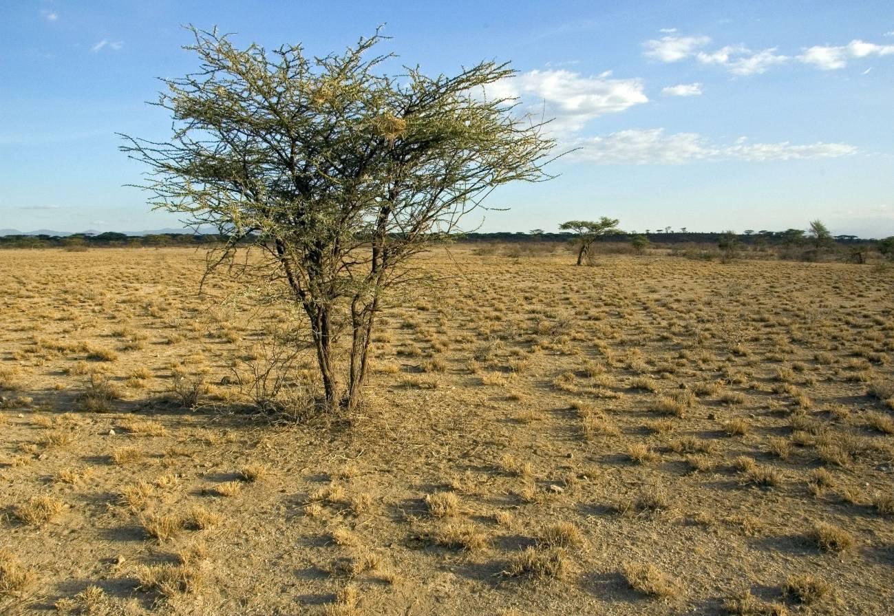 La aridez empobrecerá las tierras secas de todo el planeta