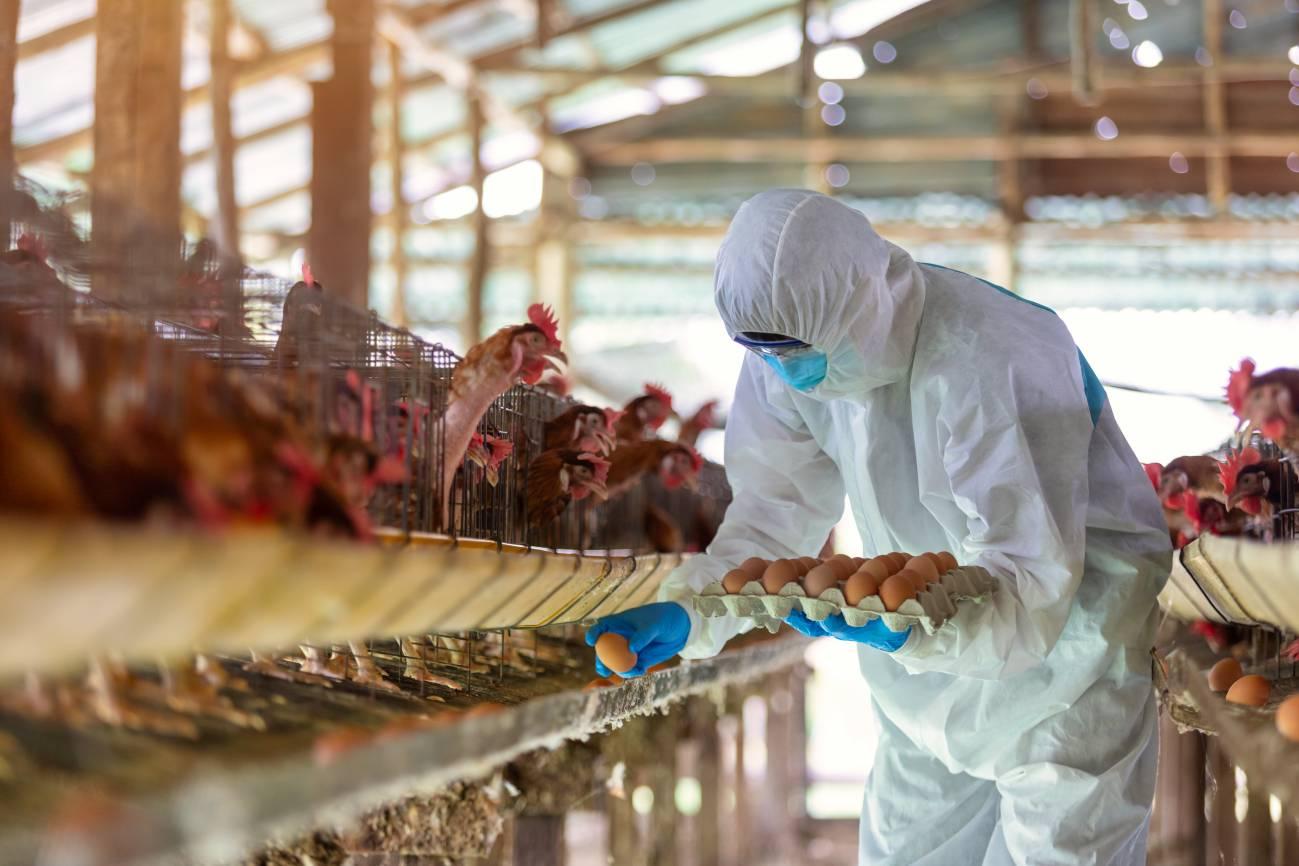 La pandemia de COVID-19 amenaza la seguridad alimentaria global