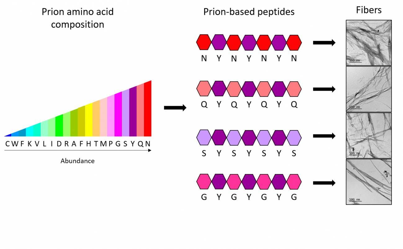 Ladrillos De Aminoácidos Para Crear Nanomateriales