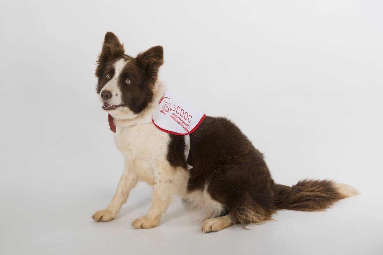 alimentos para perros con problemas de prostata