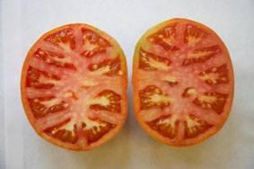 El tomate podría ser un portador adecuado para una vacuna oral contra la enfermedad de Alzheimer