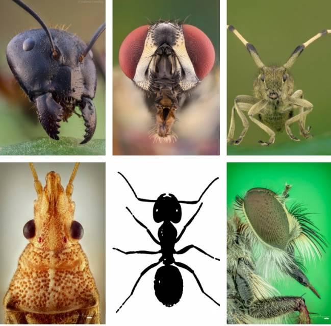 'Bichos: el mundo de los insectos'