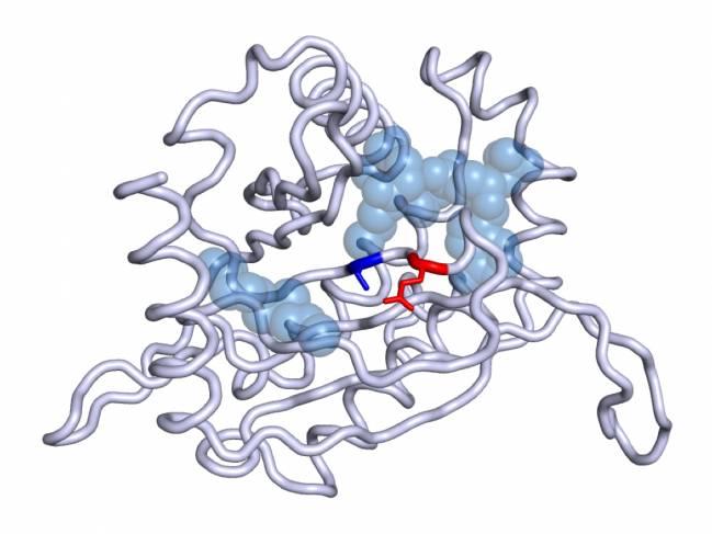 proteína DLST