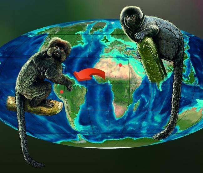 La investigación retrotrae el primer registro de fósiles de primate en América del Sur unos 10 millones de años