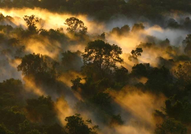 Desde los años 90, la cantidad de CO2 que almacena la biomasa de los bosques amazónicos ha disminuido a la mitad