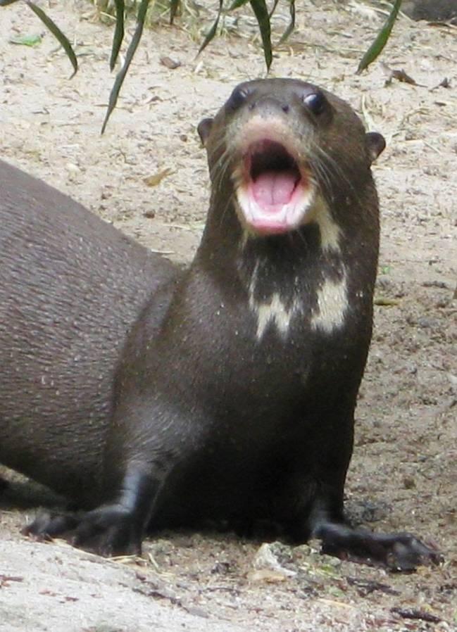 Científicas de la Universidad de Ulm (Alemania) y del Instituto Smithsonian de Investigaciones Tropicales (Panamá) han estudiado las distintas vocalizaciones