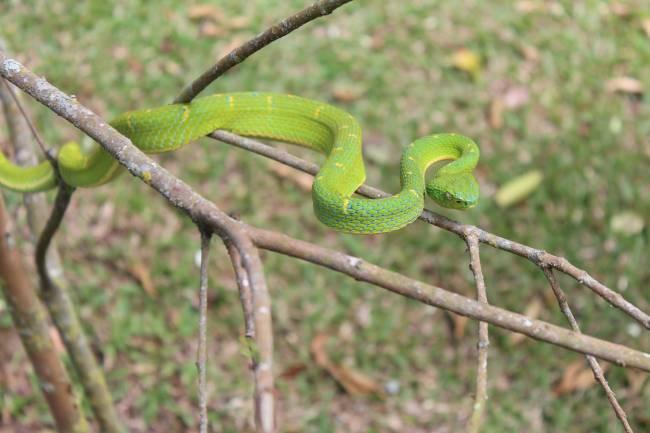 La percepción de las serpientes es muy específica e independiente de otros estímulos relacionados con el miedo