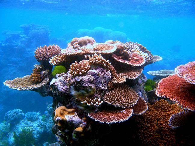 Gran Barrera de Coral. / Wikipedia