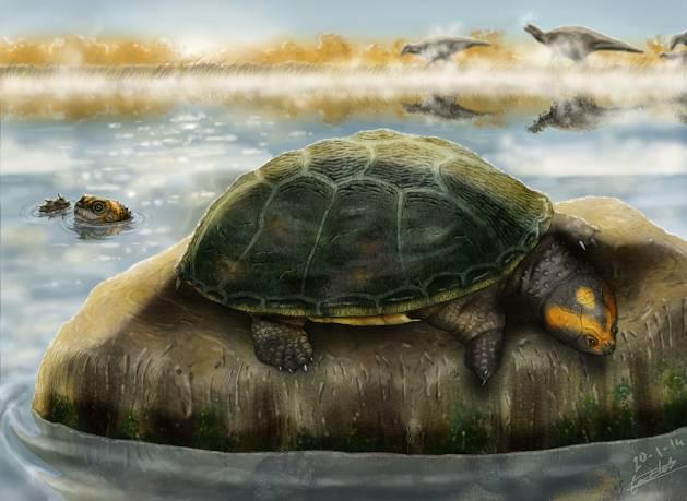Ilustración de dos ejemplares de 'Eodortoka morellana' disfrutando en el agua. / Carlos de Miguel Chaves.