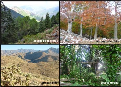 imagen de varios ecosistemas