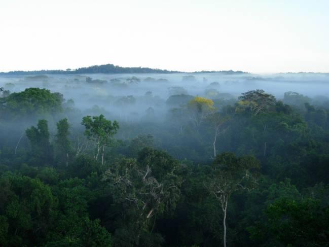 Los investigadores han comprobado que se produce un empobrecimiento general de la diversidad filogenética en los bosques fragmentados