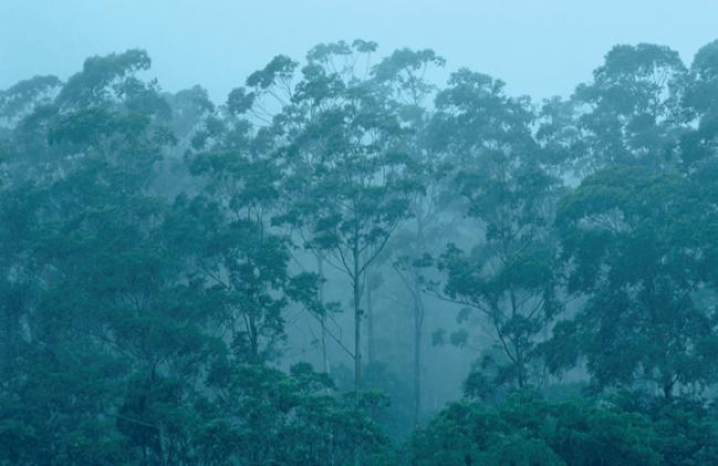 La investigación se ha centrado en el análisis de los anillos que se forman en el tronco de los árboles, que muestran su crecimiento