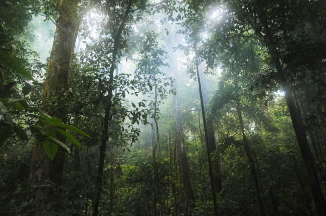 Selva nubosa