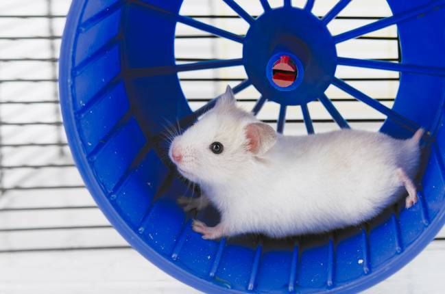 Ratón en una rueda