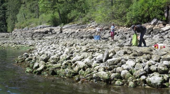 Excavación arqueológica en el jardín de almejas