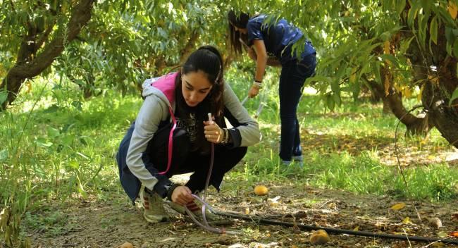 Estudiantes participantes recogiendo moscas de la fruta