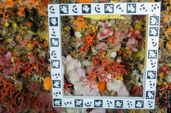 A mayor profundidad, más longevas son las especies marinas que viven adheridas al sustrato. Foto: Cristina Linares (UB-IRBio)
