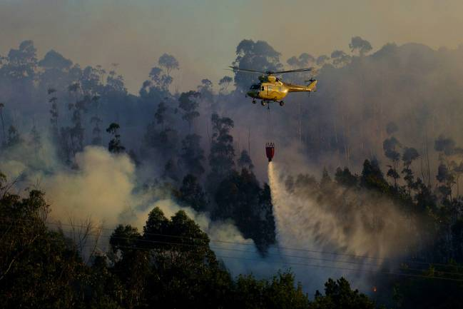 Los incendios constituyen una amenaza global para la conservación de los ecosistemas forestales