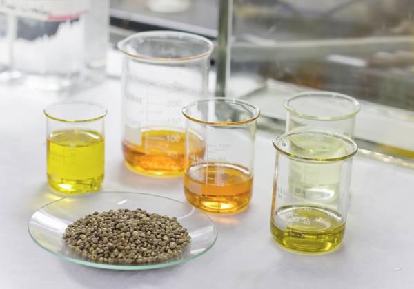 Semillas de cáñamo y distintos tipos de aceite utilizados durante la investigación