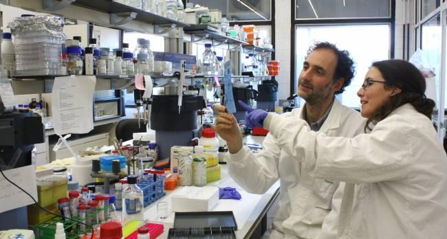 Los investigadores Carlos Saura y Lilian Enríquez en su laboratorio. (Autores: Arnaldo Parra i Carlos Saura)
