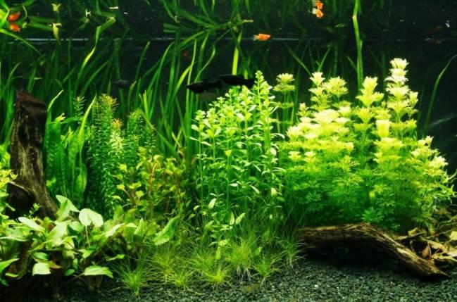El estudio destaca los valores científicos que tiene la afición a mantener peces de agua dulce en acuarios desde la vertiente de la investigación y la conservación de la biodiversidad.