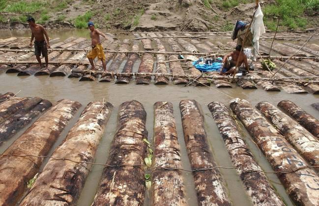Árboles de cumala talados ilegalmente, son trasladados por el río Nanay a los aserraderos de Iquitos  (Perú). / Efe