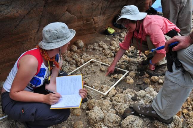 Miembros del equipo trabajando y tomado datos en los depósitos rodolíticos, construcciones en forma de bolas amarillentas, formadas por las algas calcáreas / Fundación Descubre