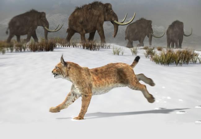 Reconstrucción del lince ibérico que habitó la península ibérica hace 1,6 millones de años. / José Antonio Peñas (Sinc)