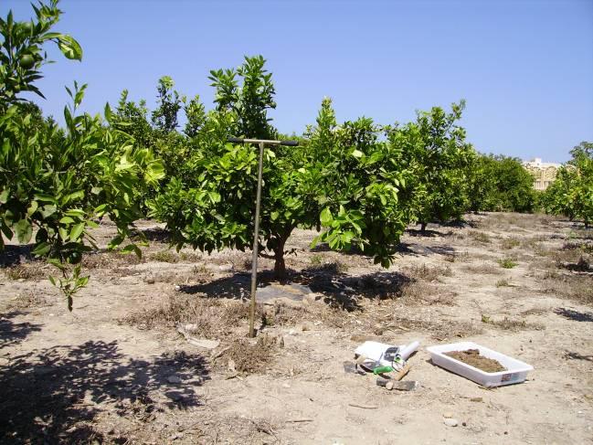 Muestreo de suelo agrícola. Foto de los investigadores.