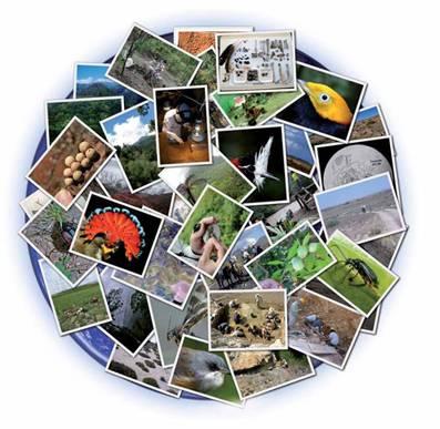 Biodiversidad en la tierra