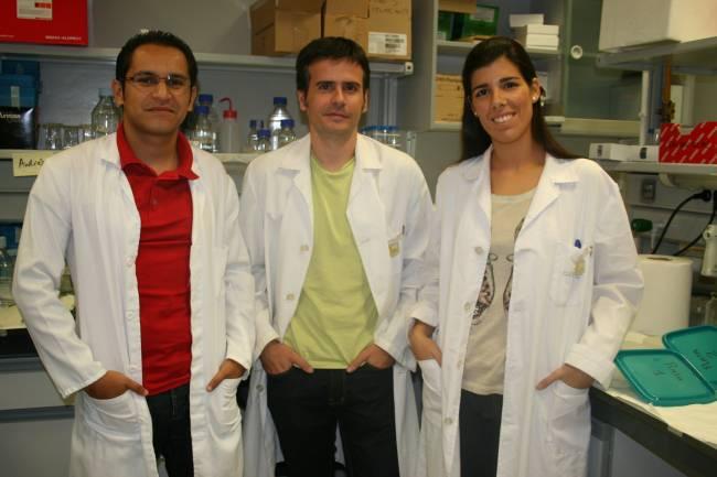 Los autores del estudio Andrés Cruz, Pablo Huertas y Ana López en su laboratorio de trabajo en el CABIMER