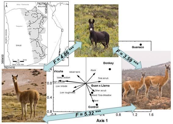 Burros asilvestrados y camélidos silvestres: juntos pero no revueltos en el Desierto de Atacama