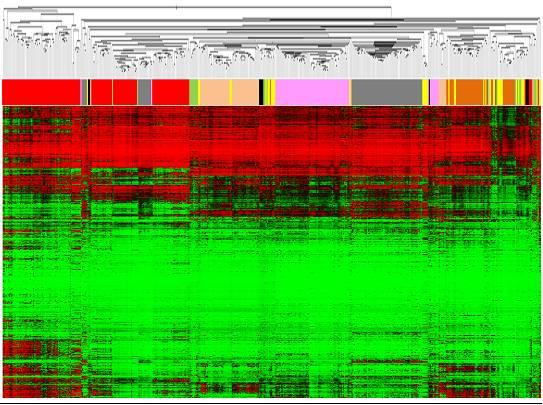 'Huellas dactilares' epigenéticas