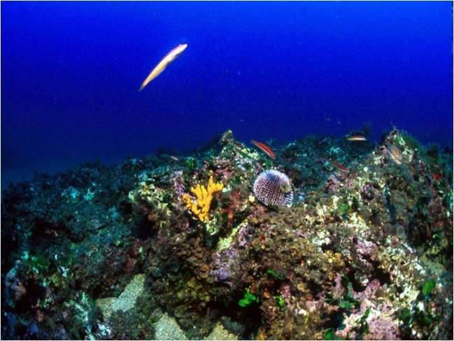 Imagen de fondo submarino en la Costa Brava. CSIC.