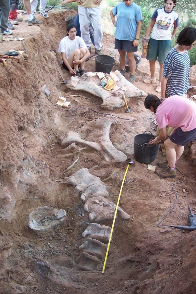 Restos de un dinosaurio encontrados en el yacimiento de Salas de los Infantes (Foto: Colectivo Paleontológico de Salas)
