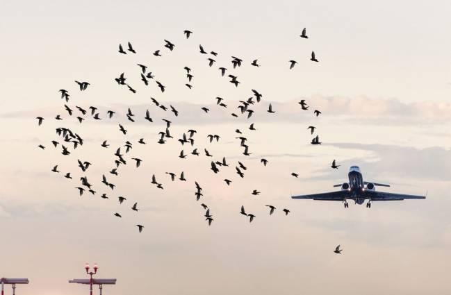 Choques entre aves y aviones