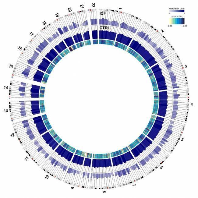 representación gráfica de los dos epigenomas identificados