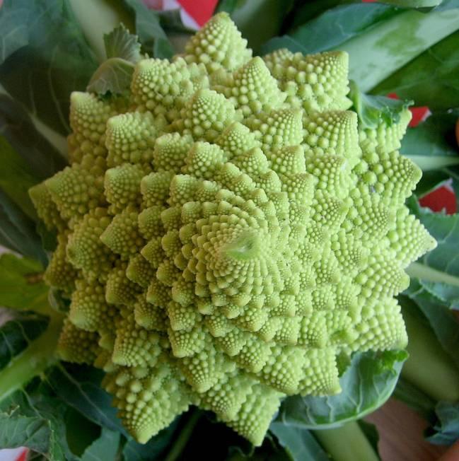 Ejemplo de brócoli de tipo Romanesco / Xavier Blanquer.