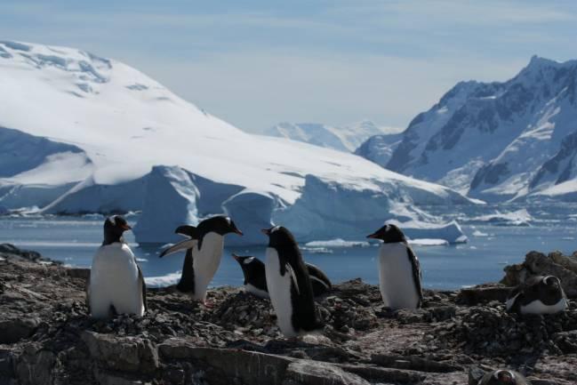 Pingüinos en las costas de la Antártida. Imagen: